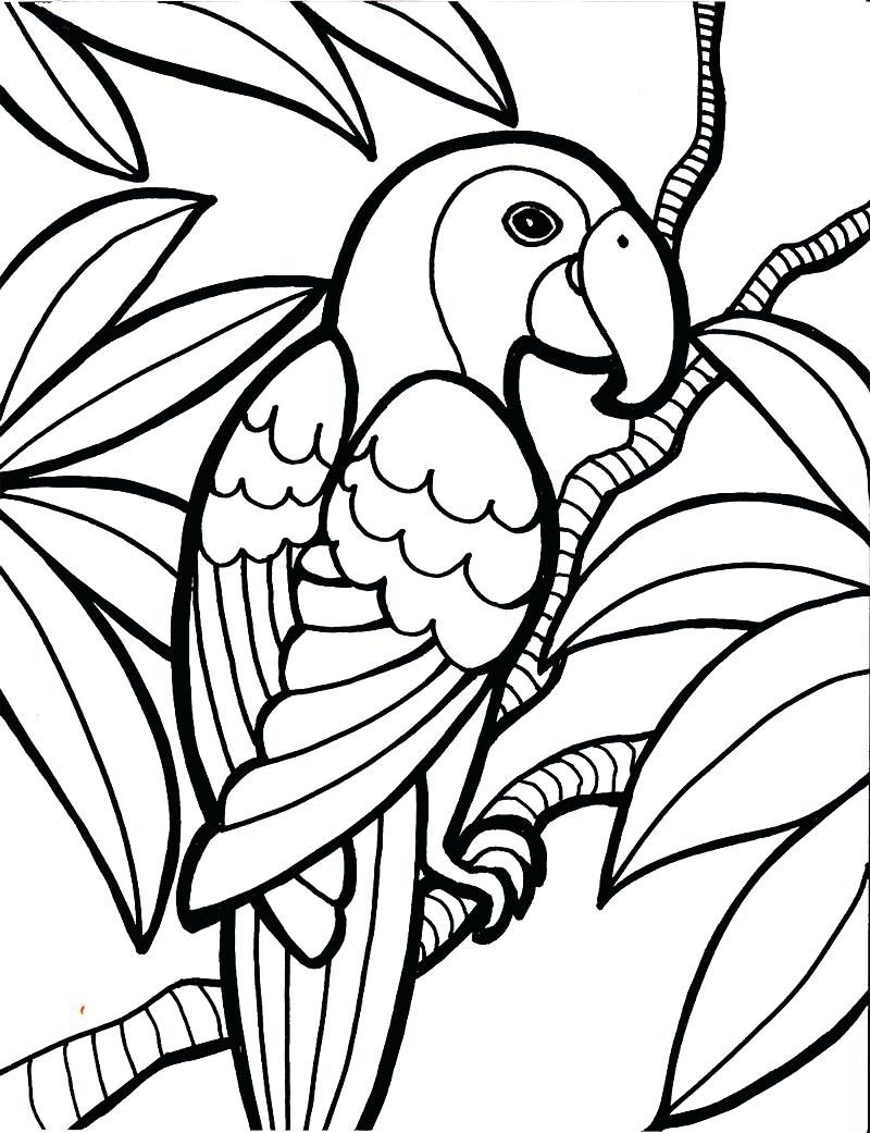 800x1041 Bird Coloring Pages Drawings Picture Of Cardinal To Color Full
