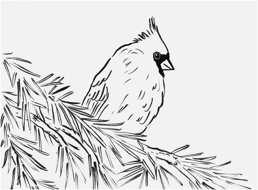 827x609 Bird Coloring Pages For Adults Image Cardinal Bird Coloring Page