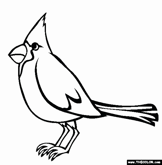 554x565 Awesome Of St Louis Cardinals Logo Coloring Pages Photos