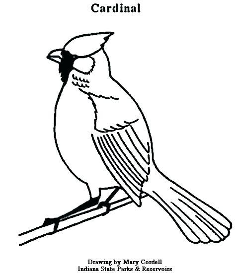 477x550 St Louis Cardinals Coloring Pages Cardinal Coloring Pages Cardinal