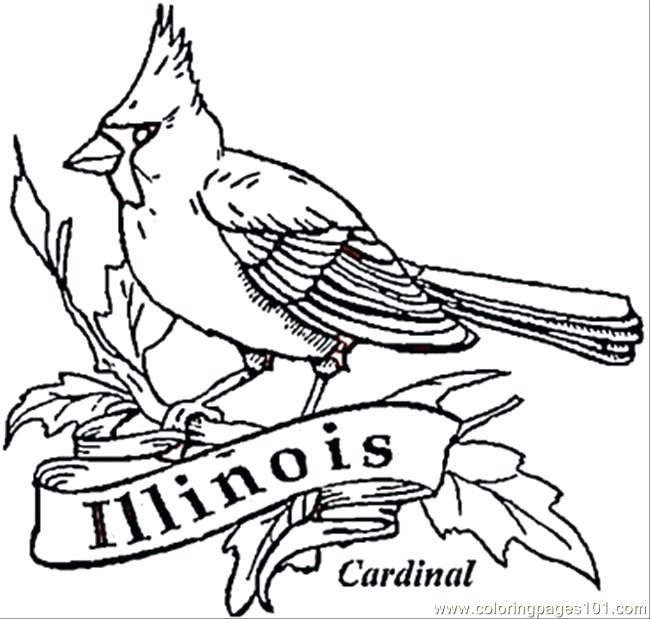 650x619 Cardinal Coloring Pages Cardinal Bird Of Coloring Page St Louis