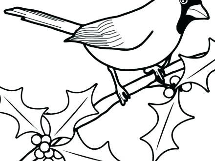 440x330 Cardinal Coloring Pages Cardinal Coloring Pages Cardinal Coloring