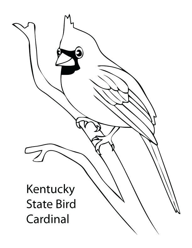 612x792 Cardinal Coloring Pages Cardinals Printable Ng Pages Birds