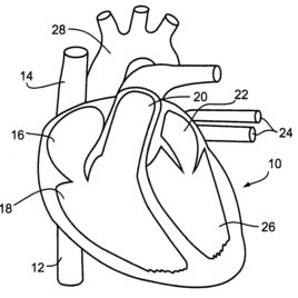 268x268 Cardiovascular System Coloring Page Archives