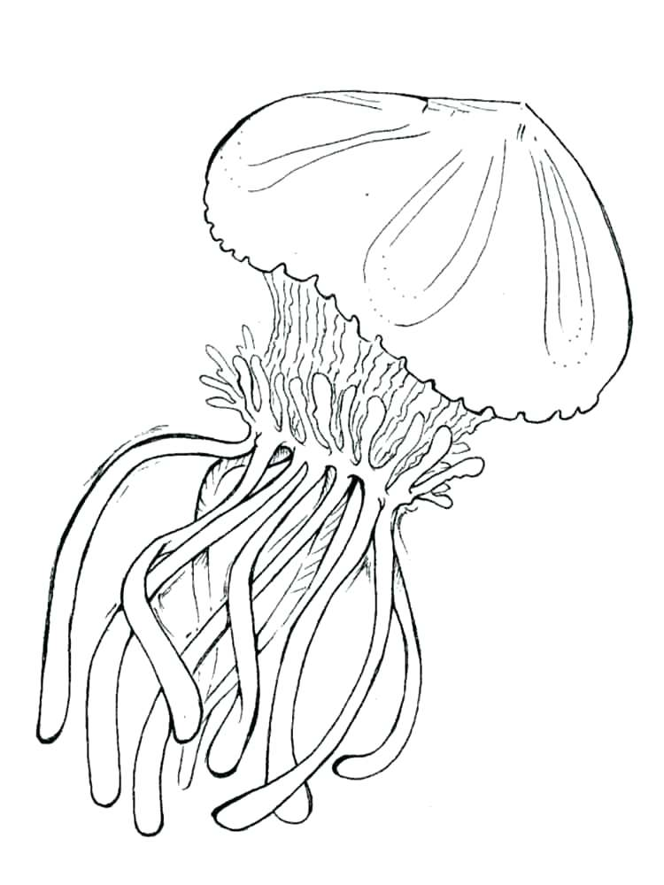 750x1000 Career Day Coloring Pages Cartoon Jellyfish Coloring Pages