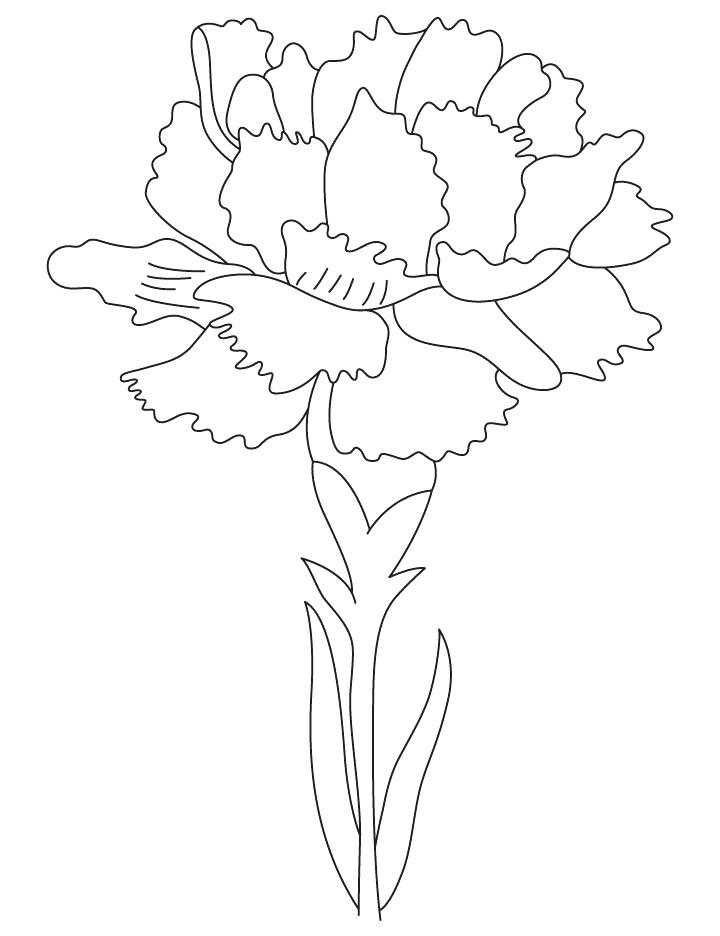 720x936 Scarlet Carnation Coloring Page Carnation Birth Flower Coloring