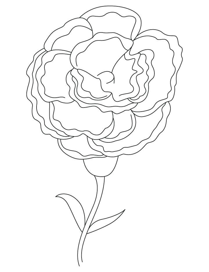 720x936 White Carnation Coloring Page As Well As White Carnation Coloring