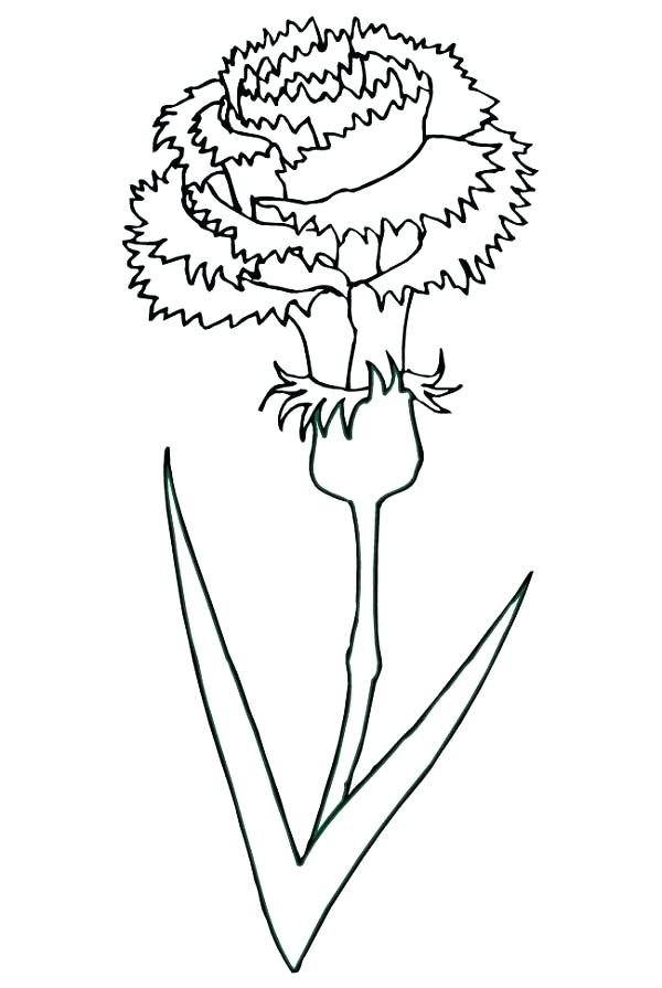 600x895 Carnation Coloring Page Also State Football Coloring Sheets Blog