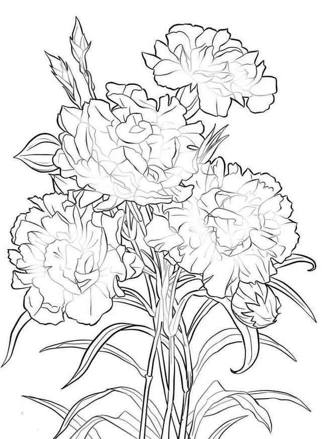 640x870 Carnation Flower Coloring Pages Forever Coloring