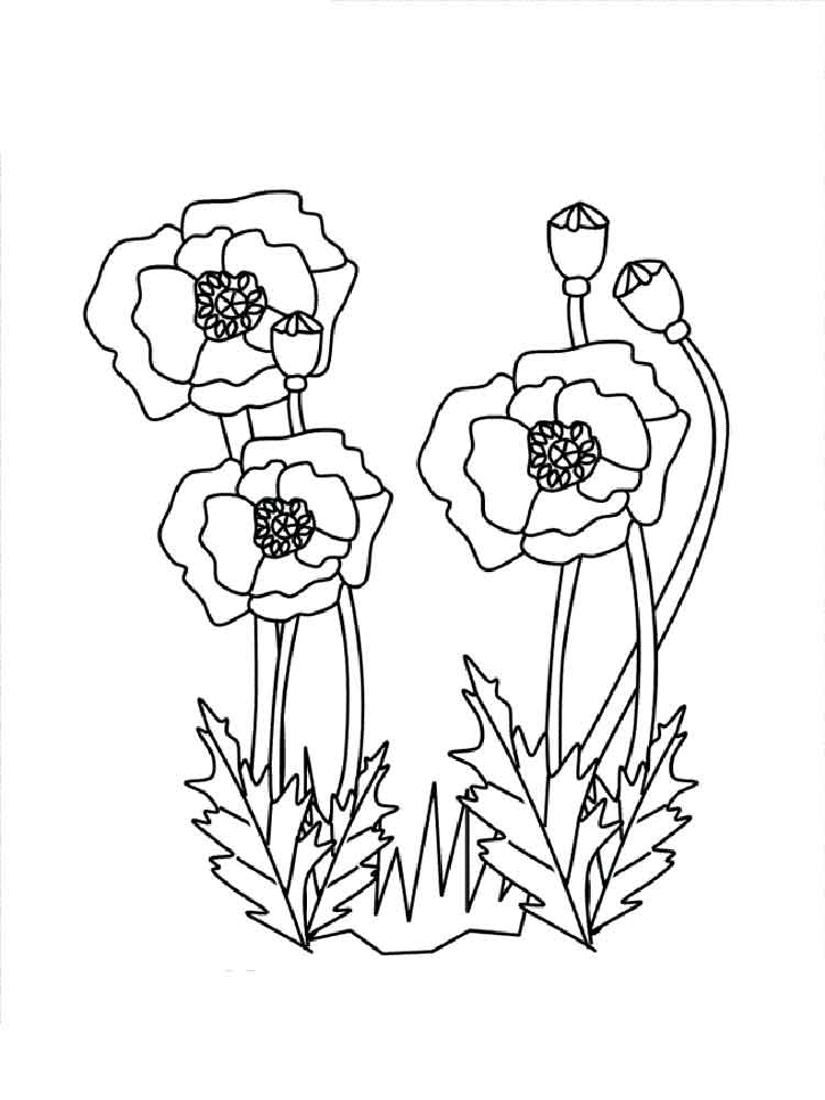 750x1000 Poppy Flower Coloring Pages Download And Print Poppy Flower
