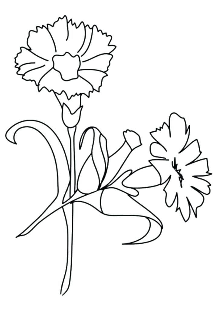 Carnation Flower Coloring Pages At Getdrawings Com Free For