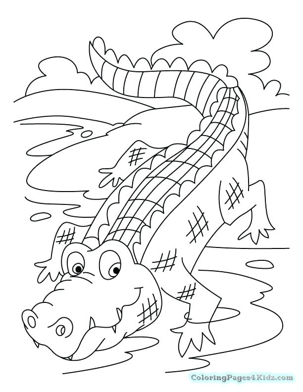 612x792 Alligator Coloring Pages Plus Alligator Therapy Coloring Pages