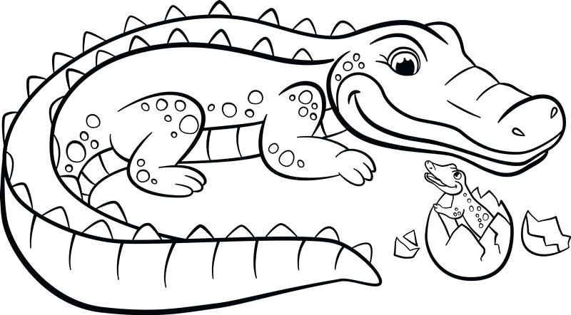 800x442 Alligators Cartoon Alligator Reptiles Coloring Pages For Adults