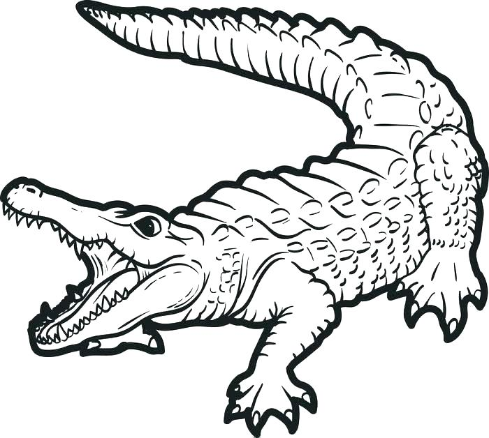700x628 Crocodile Coloring Pages Alligator Coloring Pages Cute Crocodile