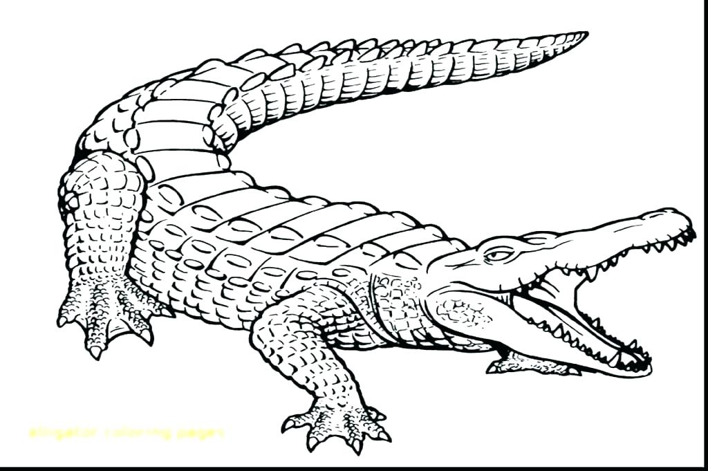 1024x681 Alligator Coloring Pages
