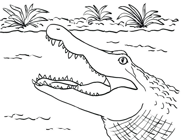 728x556 Alligator Coloring Page Alligator Coloring Page With Wallpaper