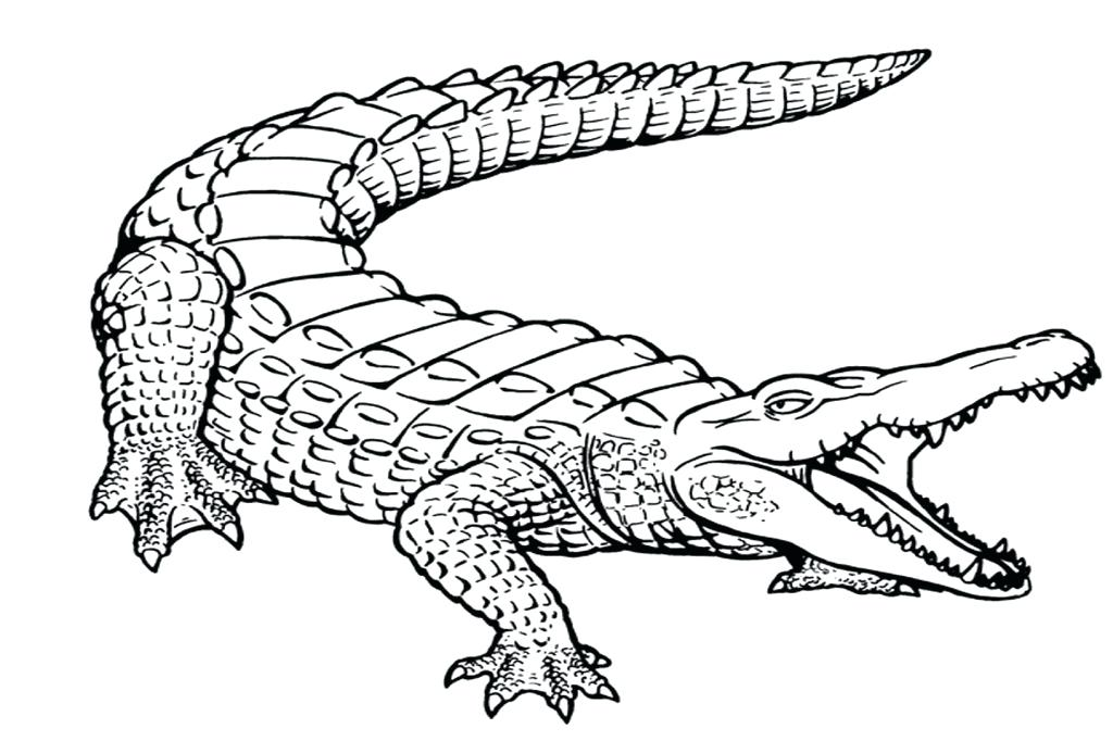 1024x682 Alligator Coloring Page Alligator Letter A For Cute Baby Alligator