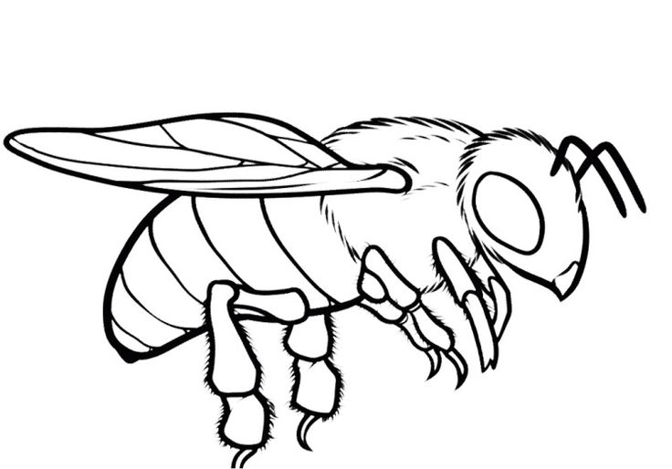 736x514 Crafty Bee Coloring Pages Honey Page Ideal