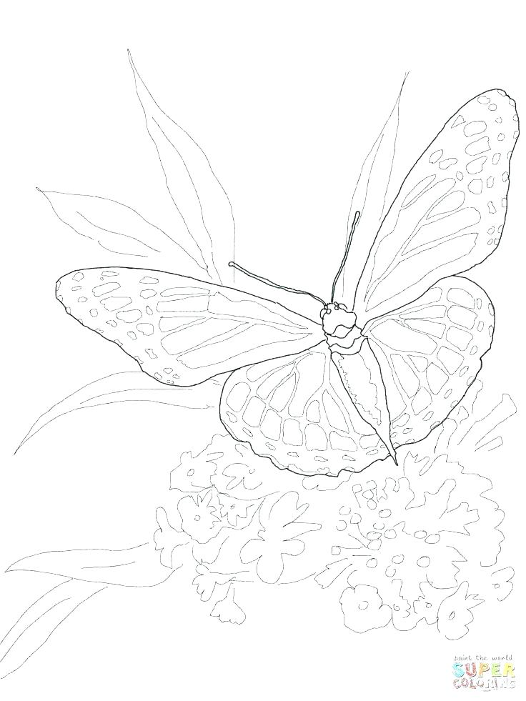 736x981 Cartoon Butterfly Coloring Pages Monarch Butterfly Coloring Pages