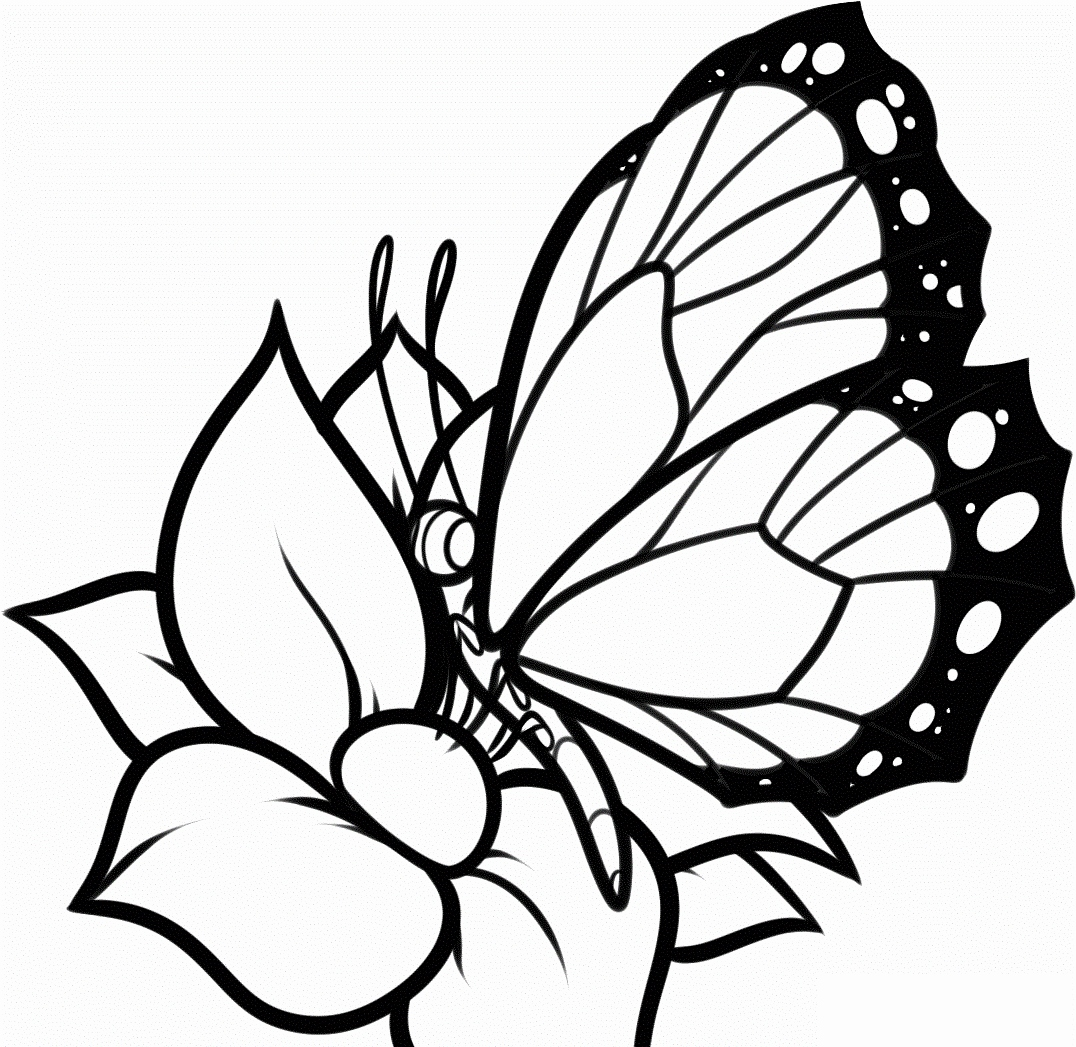 1076x1047 Cartoon Butterflies Coloring Pages Photograph Butterflies Coloring