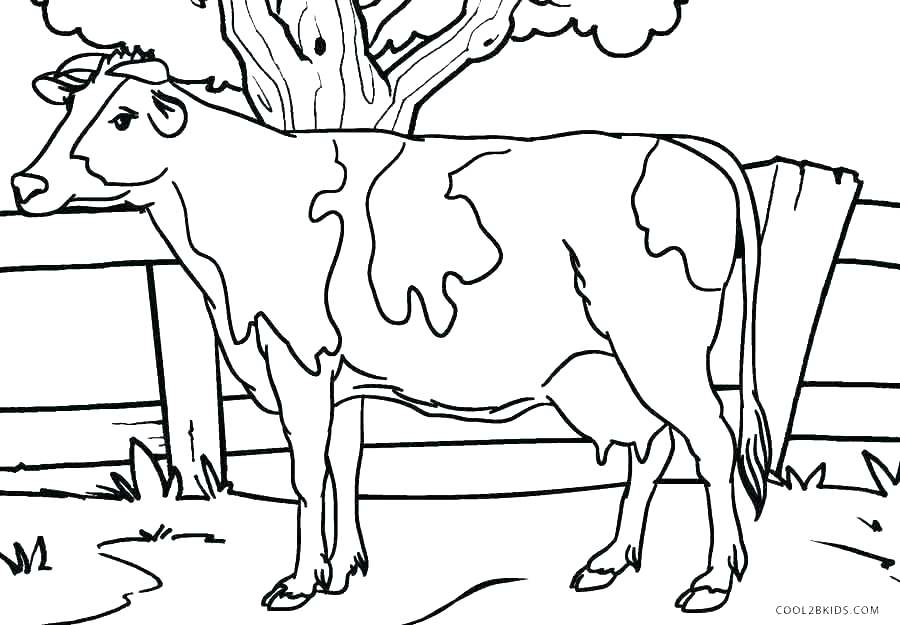 900x625 Baby Calf Coloring Pages Fabulous Big Cow Coloring Page With Cow