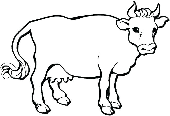 700x478 Cows Coloring Pages Cow Coloring Pages Cow Coloring Pages Free