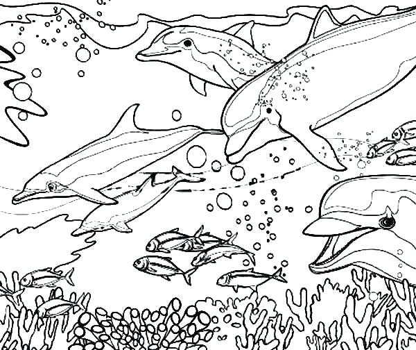 600x504 Dolphin Coloring Pictures To Print Baby Dolphin Ng Pages Dolphin