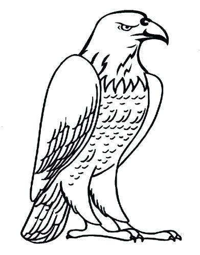 391x500 Eagle Coloring Page Baby Eagle Coloring Page