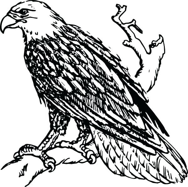 600x598 Eagle Coloring Pages Bald Eagle Coloring Page Bald Eagle Coloring