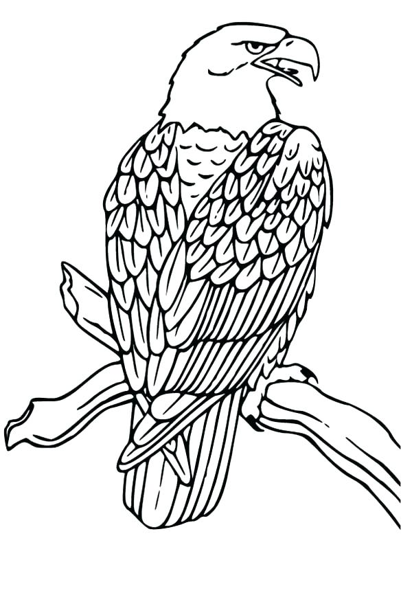 600x879 Eagle Coloring Pages Bald Eagle Coloring Pages Bald Eagle Drawing