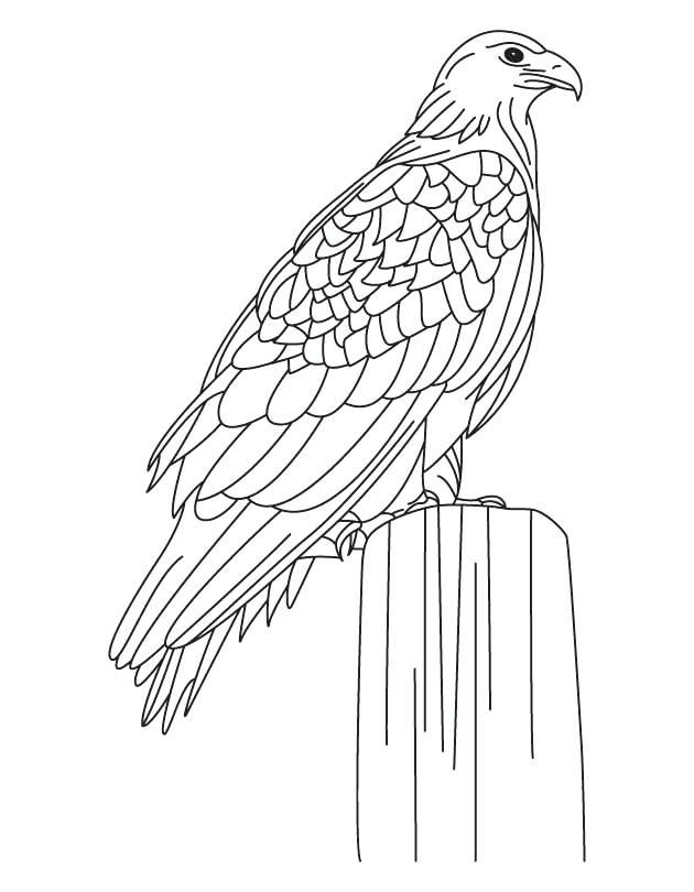 630x810 Eagle Coloring Pages Eagle Coloring Pages To Print A Cartoon Eagle