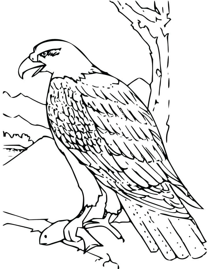720x932 Eagles Coloring Pages Eagles Car Tun Free Printable Bald Eagle