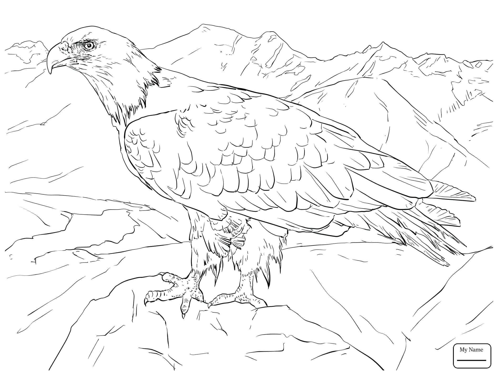2089x1567 Golden Eagle Coloring Pictures Perfect Eagles Pages Became Cheap