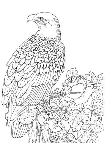 360x480 Realistic Bald Eagle Coloring Page From Bald Eagle Category