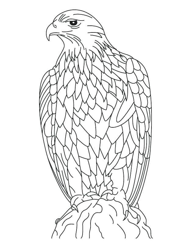 630x810 Eagle Color Page