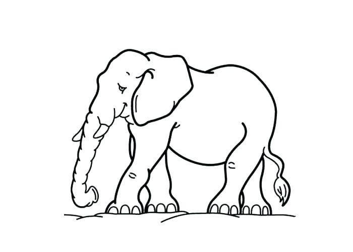 700x500 Wombat Coloring Page Wombat Coloring Page Cartoon Elephant