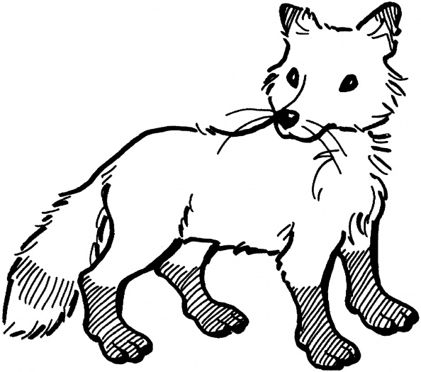 594x525 Fox Coloring Page Needles, Hoops And Embroidery Floss