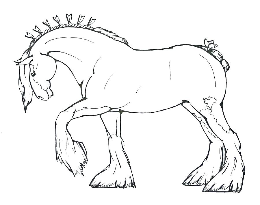 900x710 Realistic Horse Coloring Pages As Cool Horse Coloring Pages
