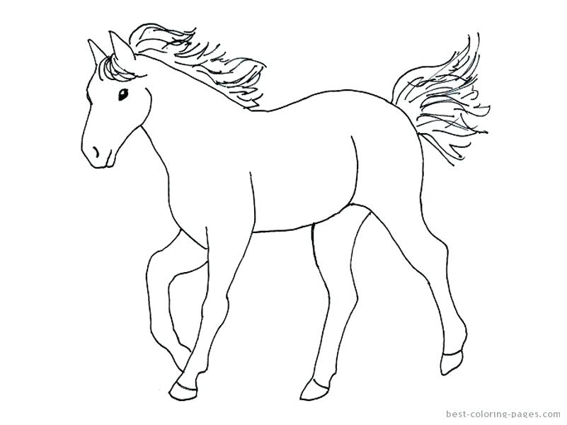 801x600 Coloring Page Of Horse