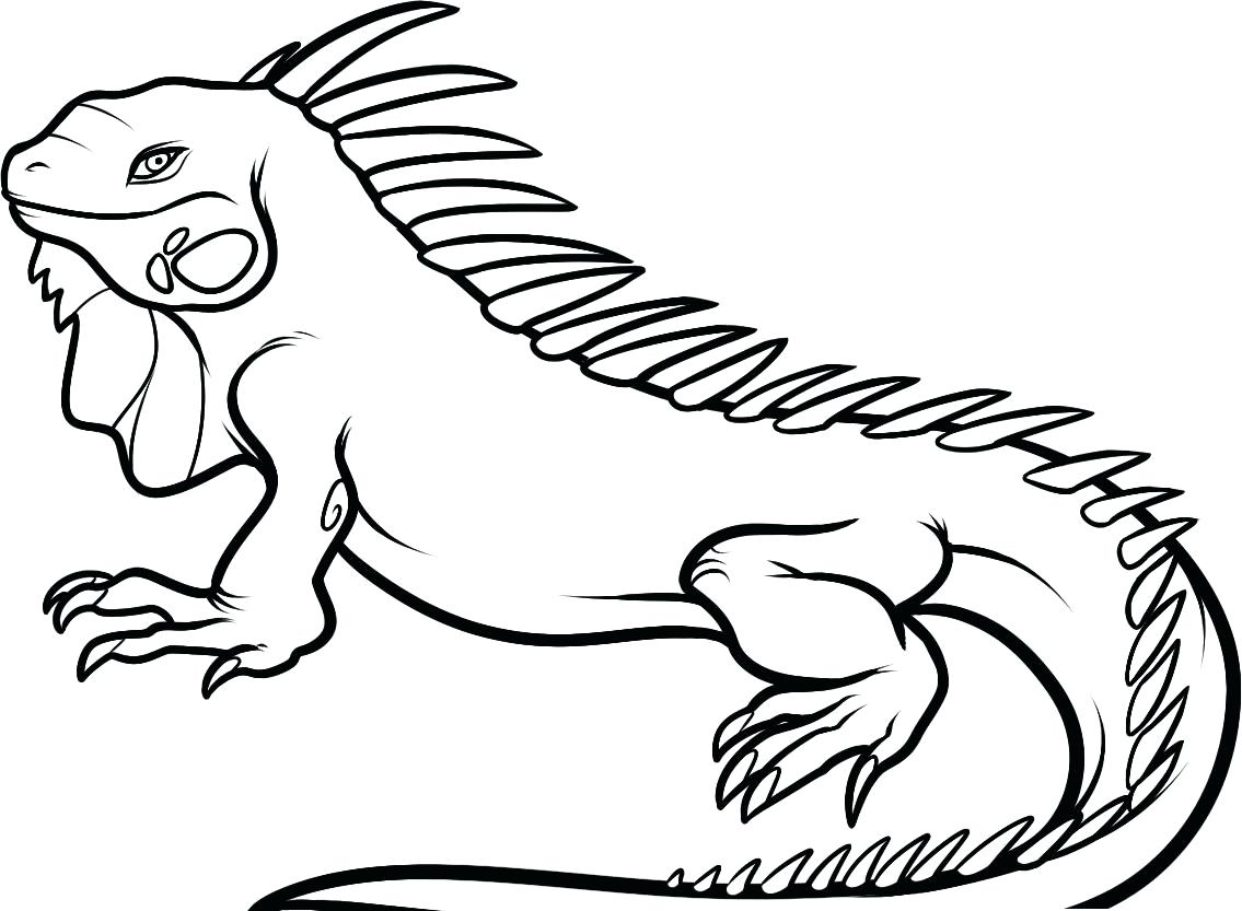 1135x833 Coloring Pages For Adults Only Free Printable Iguana Kids Cartoon