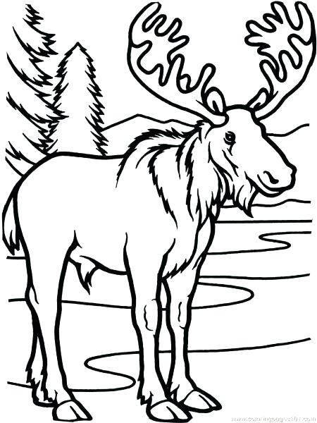450x600 Fresh If You Give A Moose A Muffin Coloring Pages Or Cartoon Moose