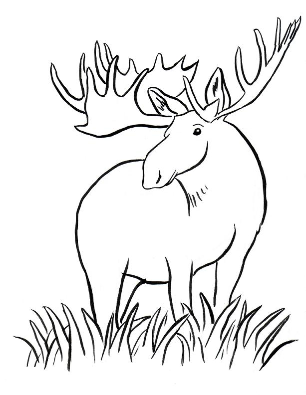 613x792 Moose Coloring Page