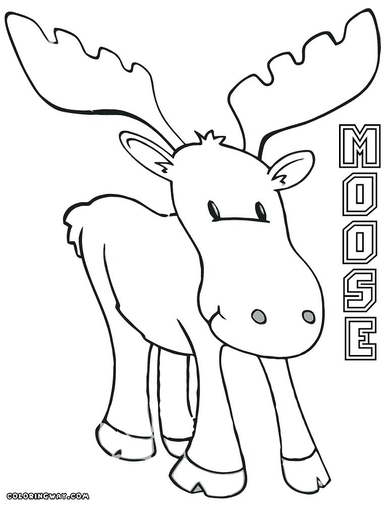 773x1000 Moose Coloring Pictures Moose Coloring Pages X Moose A Moose