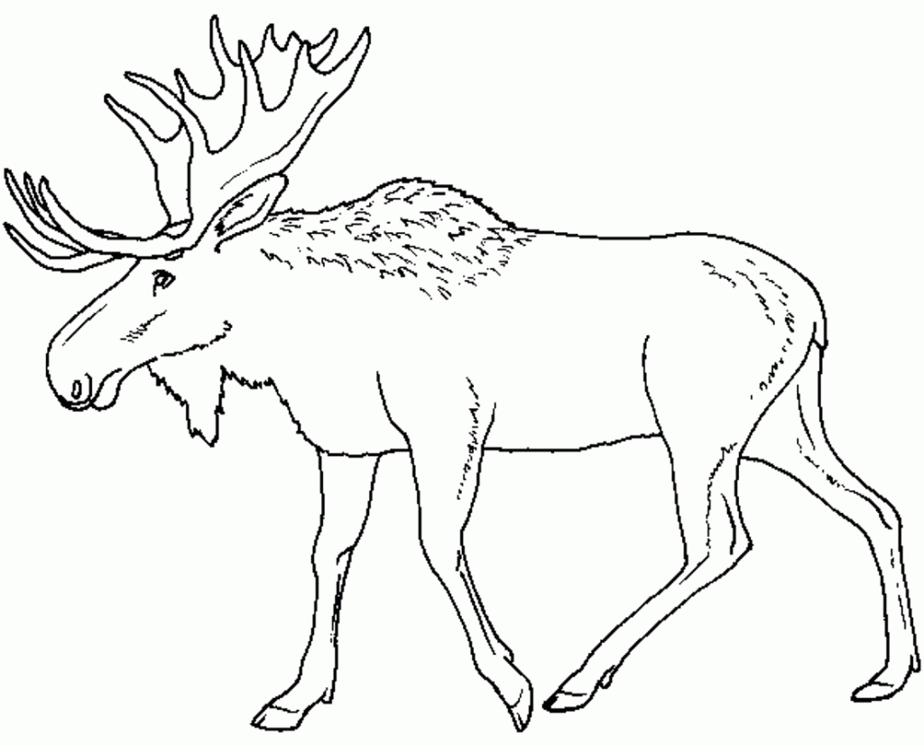 1024x826 New Moose Coloring Page Collection Printable Coloring Sheet