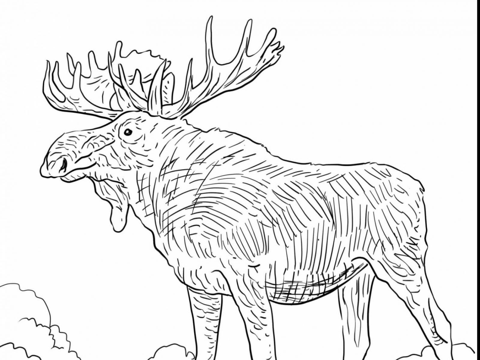 1600x1200 Photo In If You Give Moose Muffin Coloring Pages At Best Printable