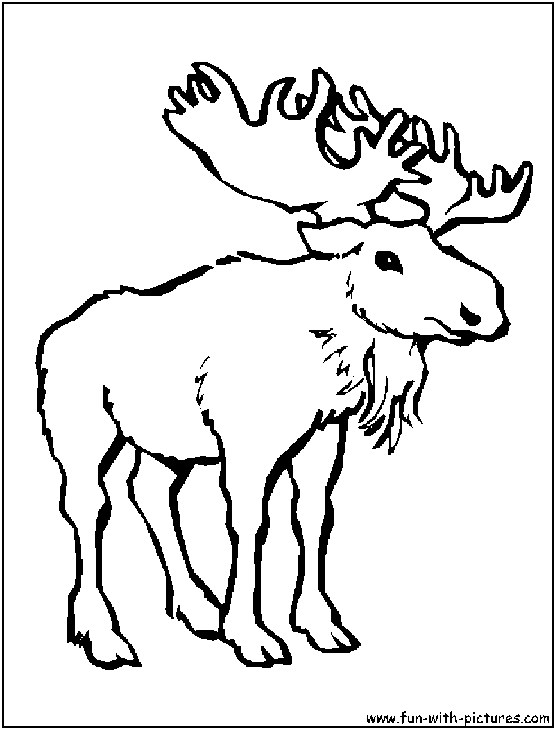 800x1050 Cartoon Moose Coloring Pages