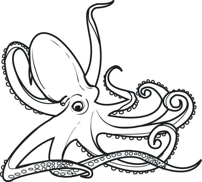 700x632 Octopus Coloring Pages Printable Octopus Coloring Page For Kids