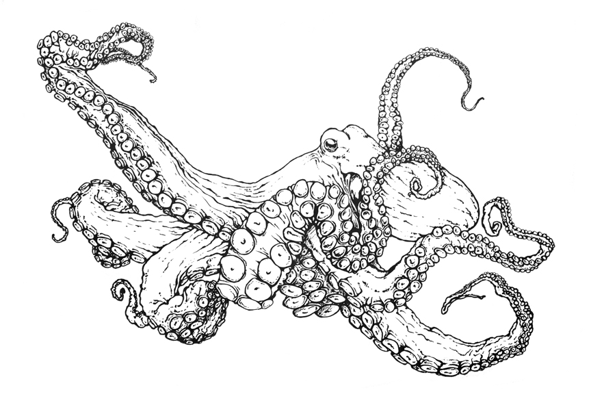864x576 Cartoon Octopus Coloring Page Book With Decorations