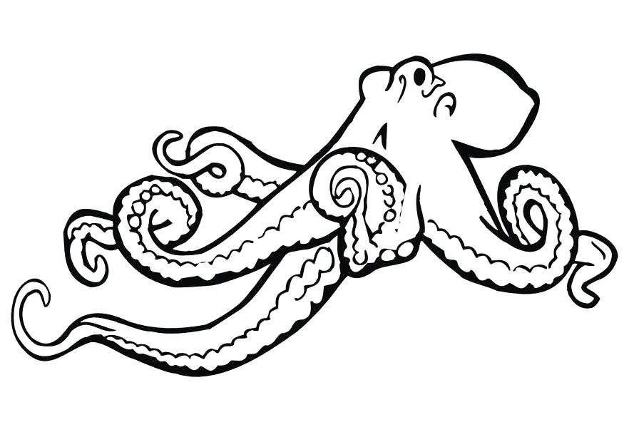 875x620 Cartoon Octopus Coloring Page Free Printable Pages