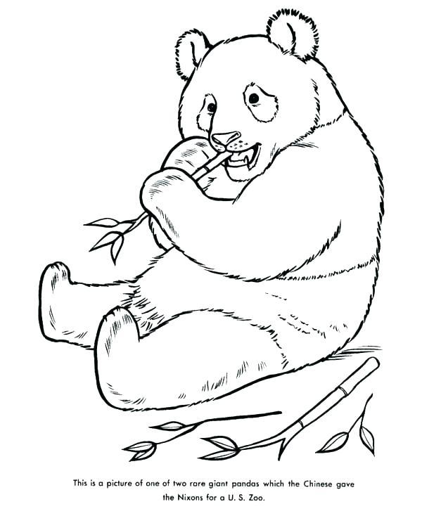 600x734 Panda Bear Coloring Sheet